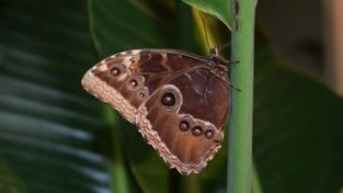 Un Tè Con Le Farfalle